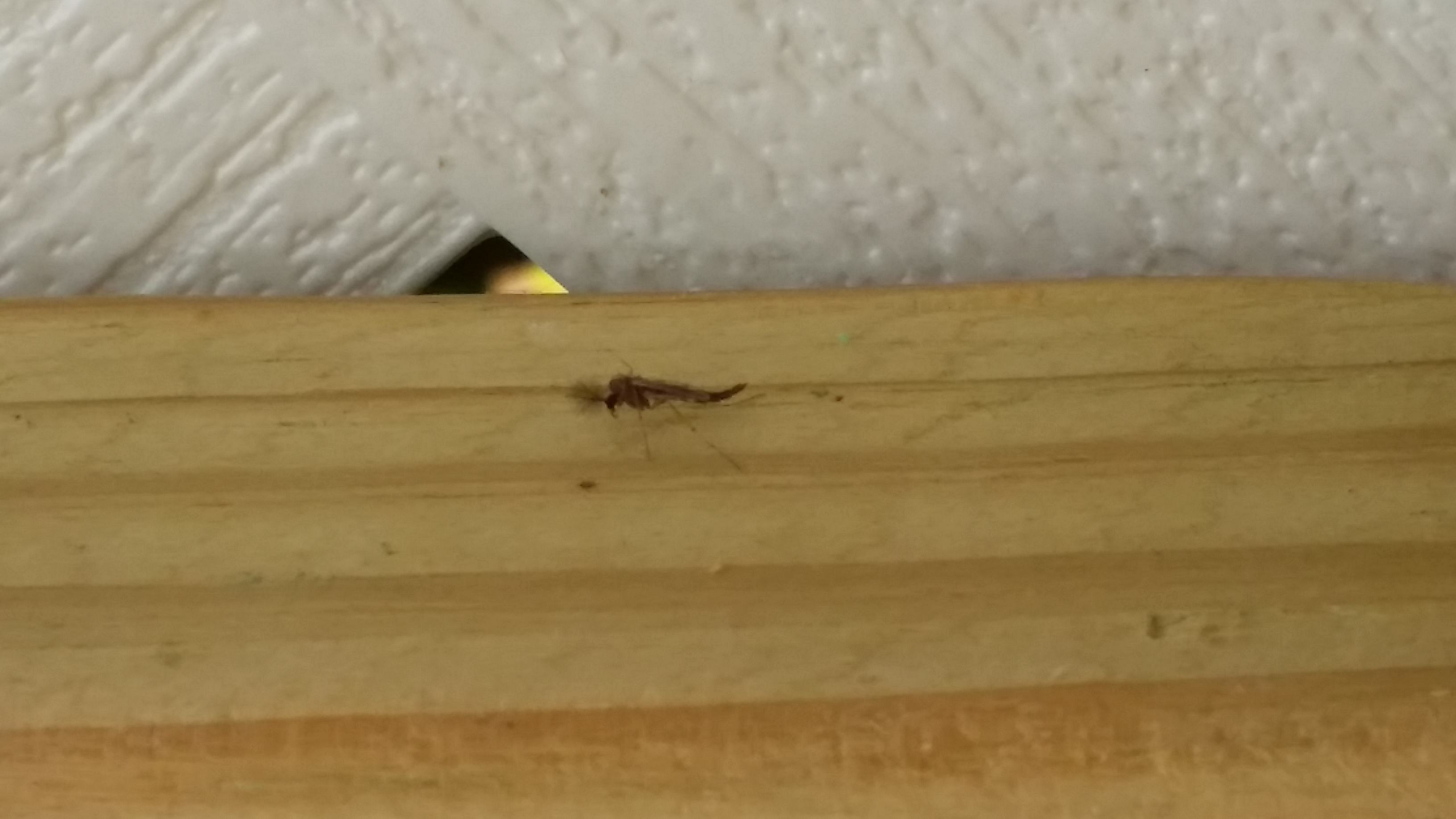 Small Flying Bugs In Bedroom Tiny Brown Mites In Bedroom Bedroom Style Ideas