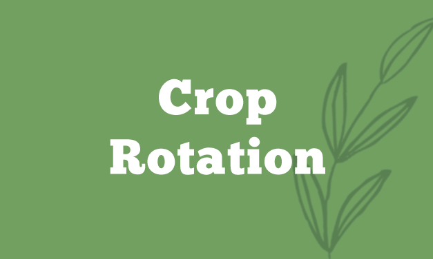 Crop Rotation – The Secret of a Successful Organic Garden